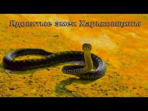 Вопрос: Какие змеи водятся в Битцевском лесу?