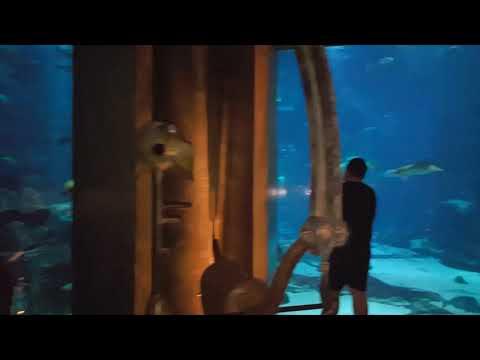 The Lost Chamber Aquarium   The Atlantis   Dubai