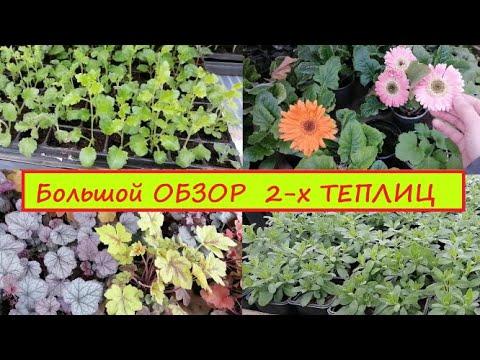 ОБЗОР - что растёт в теплицах на 1.04.21 Каталог и спрос. Как буду делать отправки моих растений.