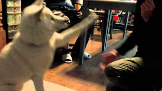 ワンコ用のバームクーヘンをプレゼントされた「北海道犬・ソラ」 初めて...