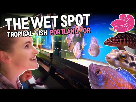 FISH STORE TOUR and ROAD TRIP