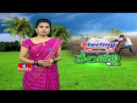 Malbari Plantation | Organic Farming by Adilabad Farmer | 14-10-16 | Nela Talli | HMTV