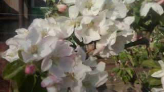 Шопен весенний вальс