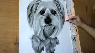 Drawing : Dog