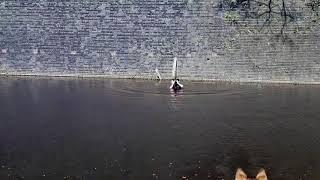 もう大丈夫、さあいっしょにおいで!運河に飛び込んで猫を助けた男性がいた