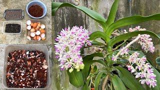 Fertilizante Natural Caseiro Para Orquídeas