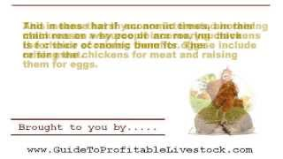Beginner Steps To Raising Your Own Meat Chickens