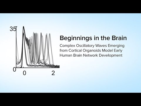 Beginnings in the Brain: Complex Waves from Cortical Organoids Model Early Human Brain Development