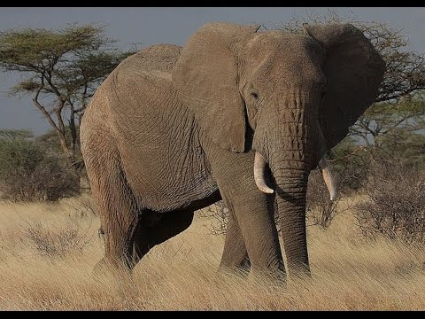 documentary-animal-world-nature-film