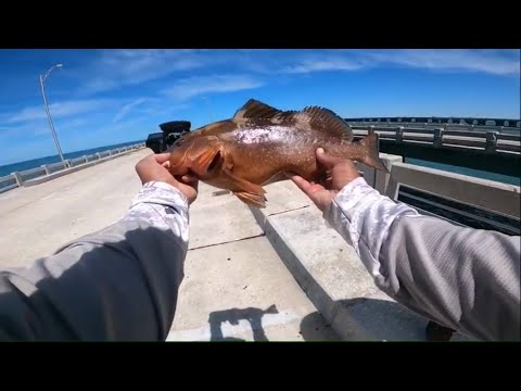 HOT GAG And Red GROUPER ACTION AT THE SKYWAY FISHING PIER!!!! Grouper Fishing St Pete Florida