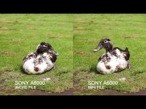 Sony A6000 - AVCHD Vs MP4 Video Comparison