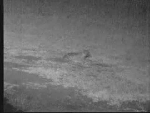 Hyena Braving Thunderstorm
