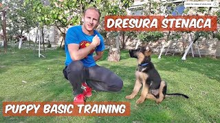 Dresura štenca njemačkog ovčara - German shepherd puppy training