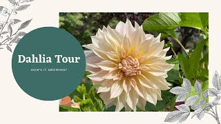End of Summer Dahlia Tour // How's It Growing?