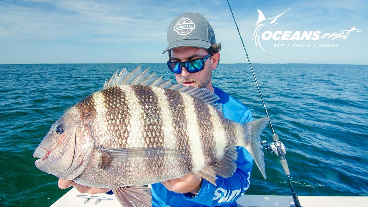 Download Fall Fishing for Sheepshead & Cobia (Chesapeake Bay)