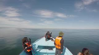 06 - Flujo de conciencia de un hombre sorprendido ante una ballena y el intento de poema improvisado