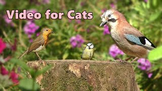Videos for Cats  Birds in The Flower Garden  10 HOURS
