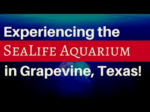 Experiencing the SeaLife Aquarium in Grapevine, Texas!