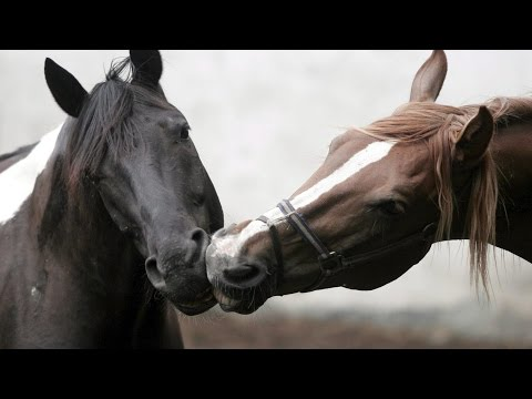 Now We Are Free by Lisa Gerrard (Gladiator)  BEAUTIFUL HORSES
