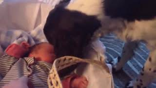 Funny & cute dogs and kid 3