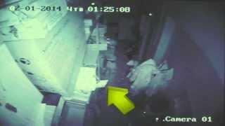 Камера наблюдения срабатывает на движение ночью в подсобке.Что это? what's this?