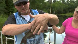 urban catfish cookin gone wild field to table s2 e5   indiana dnr