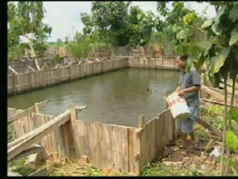 Indonesian Fishery sector (capture fishery - aquaculture - p