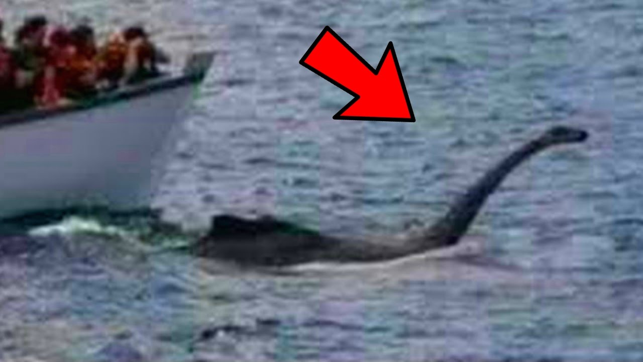 Sea Monster Sighting | nyloners  |Real Sea Monsters Pictures