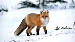 Animals in winter Животные зимой