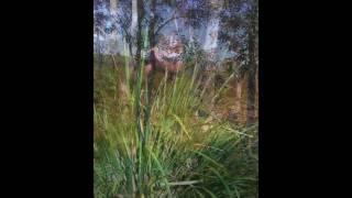 Jane Rutter Flute Improvisation- Noosa Meditation 美しいフルートの...