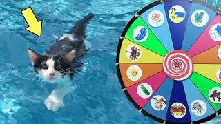 Giramos la ruleta y mis gatos graciosos Luna y Estrella cumplen retos en la piscina / Funny cats
