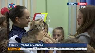 В школе №28 собирают корм для собак