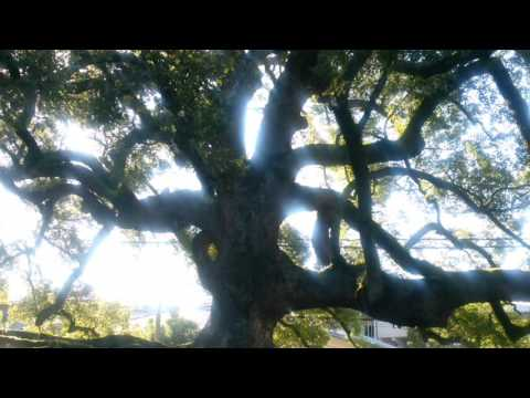 The ancient tree at Shonen temple in Kyoto