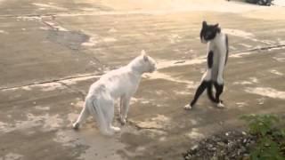 Эти смешные веселые кошки, приколы с животными
