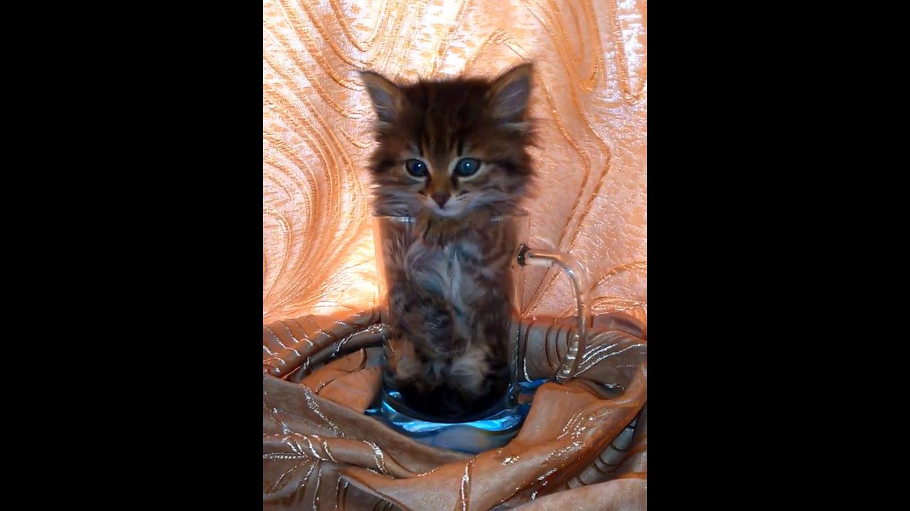 котенок в кружке - YouTube