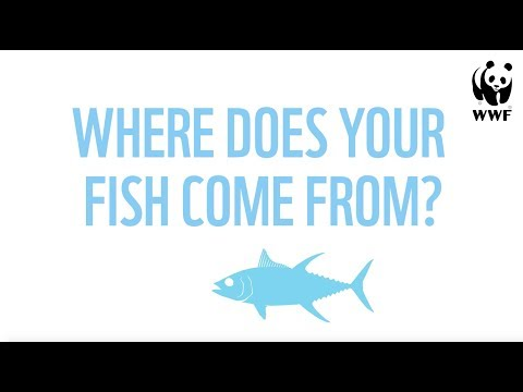 Where Does Your Fish Come From?