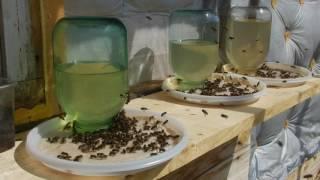 Солевые поилки для пчёл
