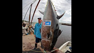 World's Biggest Tuna Ever Caught!