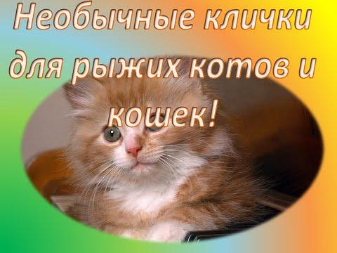 Как назвать котенка мальчика рыжего с белым