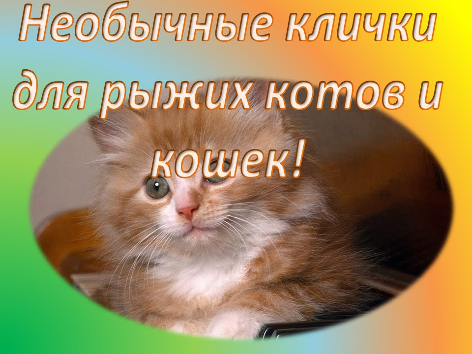 Имена животных котов