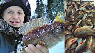 РЫБАЛКА МЕЧТЫ КИЛОГРАММОВЫЕ ОКУНИ Зимняя рыбалка 2020