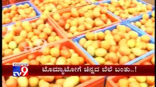 Price Rise Brings Cheer to Tomato Growers in Kolar