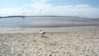 Horse Shoe Beach - Newcastle - Maxie Goes To The Dog Beach.