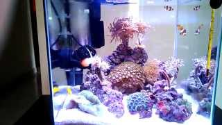 Newa more NM 030 reef aquarium feeding time