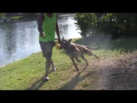 OMG! This dog performs at lightning fast speed..... MUST WATCH!