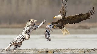 15 Craziest Fights in the Animal Kingdom