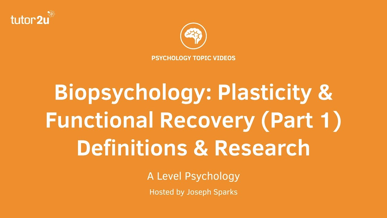 brain plasticity research