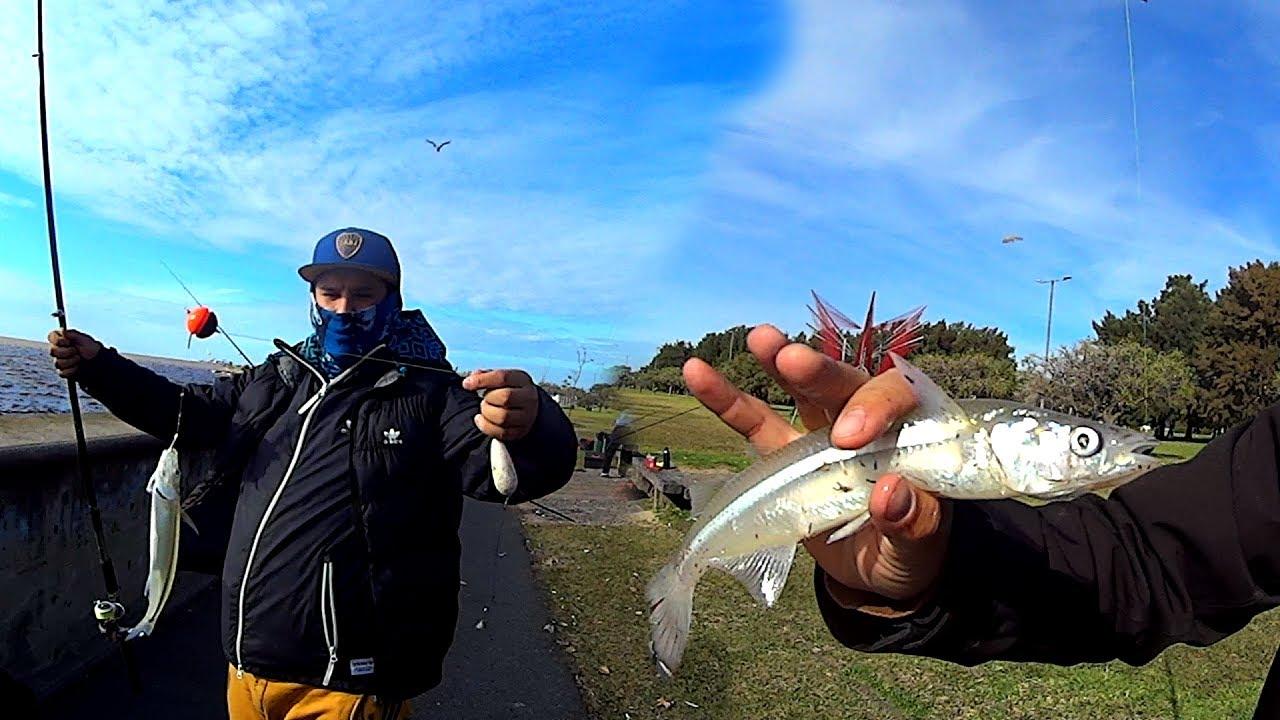 Una pesca de las que no te olvidas, se dio con mucho pique en este lugar gratis
