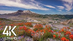 Birds Chirping in the Mountains - Relaxing Views and Nature Sounds of Mt. St. Helens - 8 HOUR