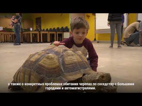 Вопрос: Когда проходит Всемирный день черепахи?